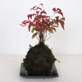 Modeling Soil How to use Kokedama final