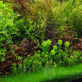 Platinum Soil Plant ONE