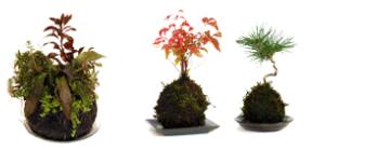Modeling Soil, Kokedama, Wabikusa