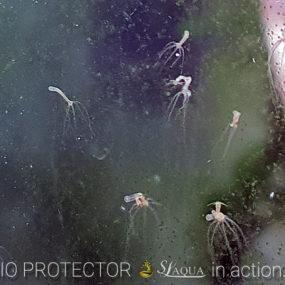 Z-1 Bio Protector 7 days test