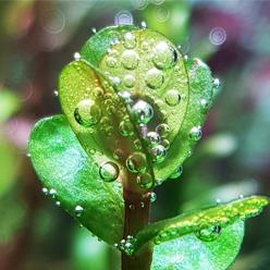 Nawozy dla roślin wodnych