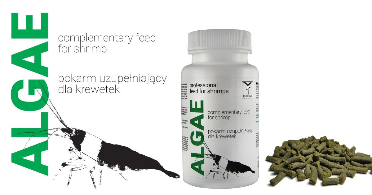 Algae - pokarm dla krewetek