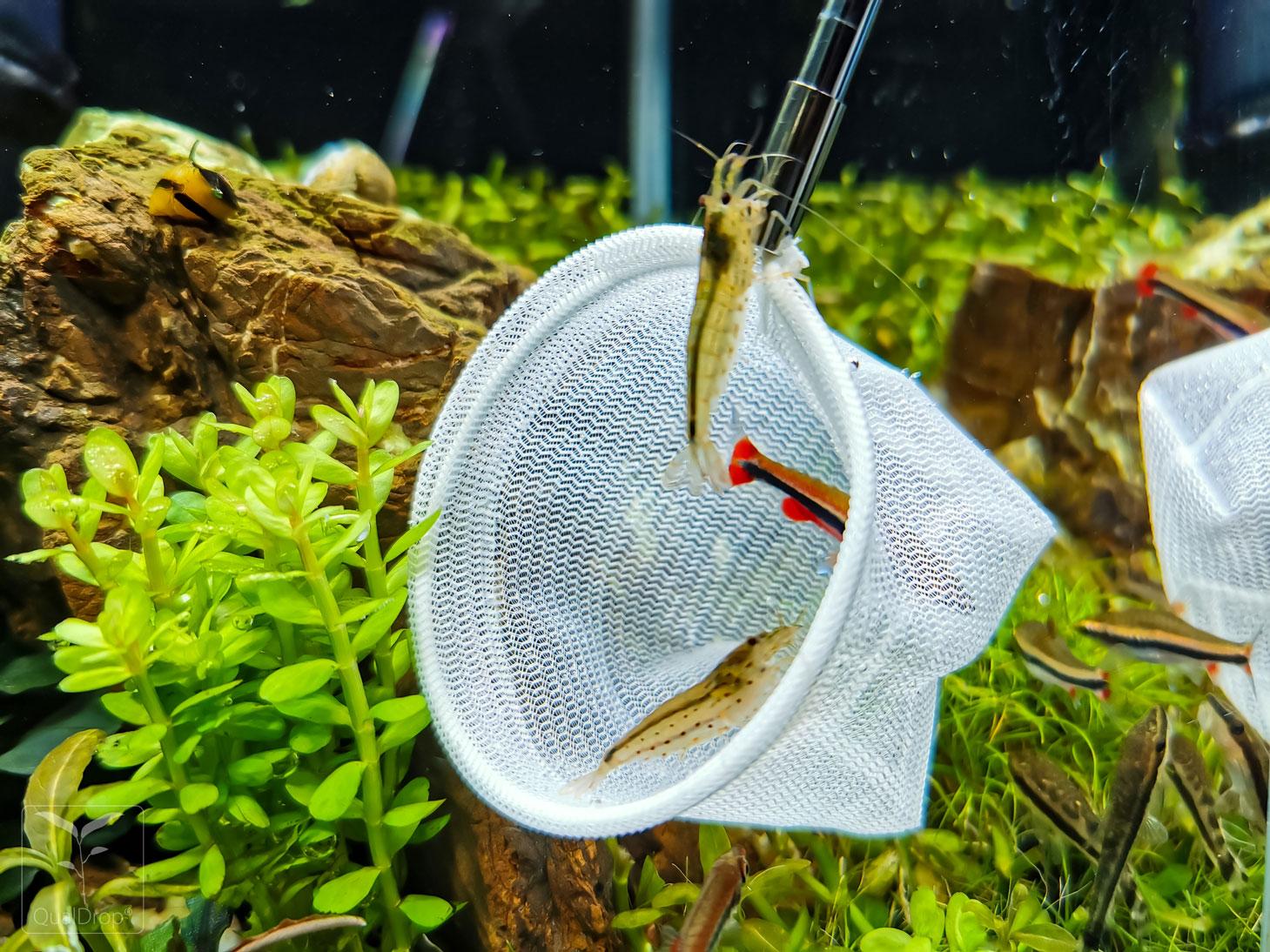 Siateczka akwarystyczna - Shrimp net